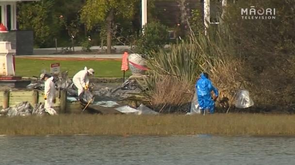 Tauranga Oil Spill 2015