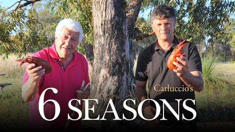 Carluccio's 6 Seasons