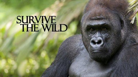 Survive the Wild