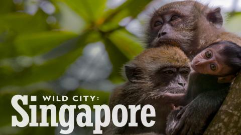 Wild City Singapore