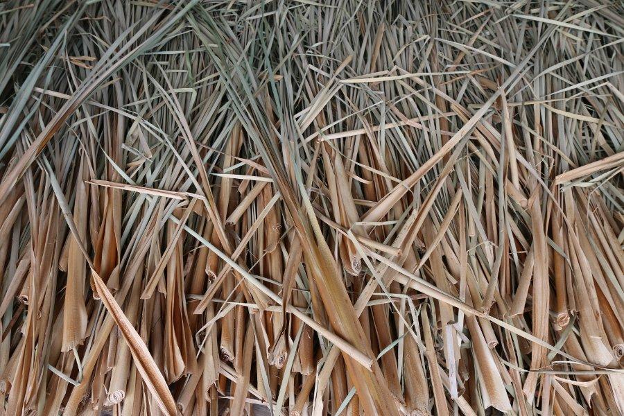 A loose bundle reeds for Mōkihi