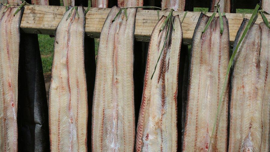 Tuna hanging to dry