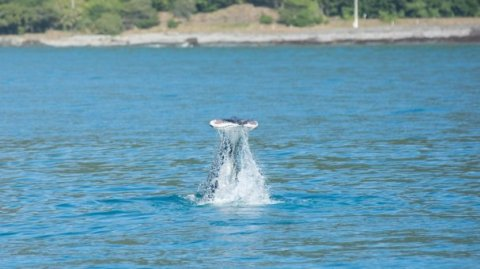 Photo sourced from DOC Cook Strait Whale Survey