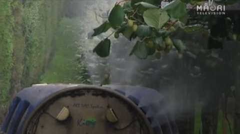 Māori growers strong voice in kiwifruit industry - Photo / file