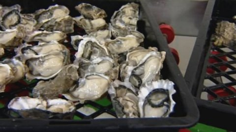 Police warn against black market oysters - Photo / File