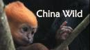 China Wild